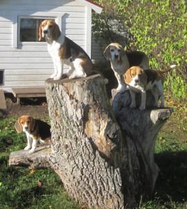 Hundar på grenar